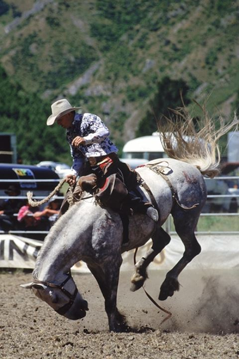 Man riding white bronco in rodeo