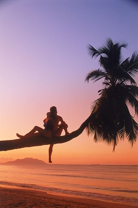 Couple sitting on palm tree at sunset in Seychelles