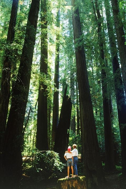 Mother and son standing under tallest trees in the world in California