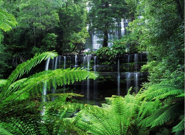 Russel Falls and Creek in Tasmania rainforest