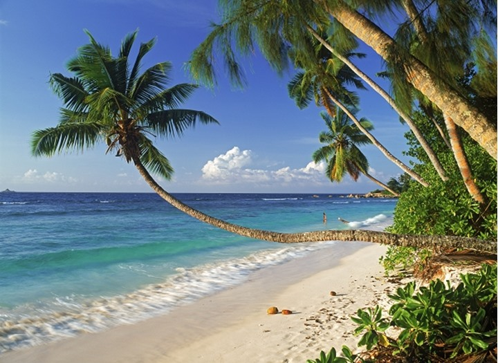 White sandy beaches and overhanging palms on La Digue Island