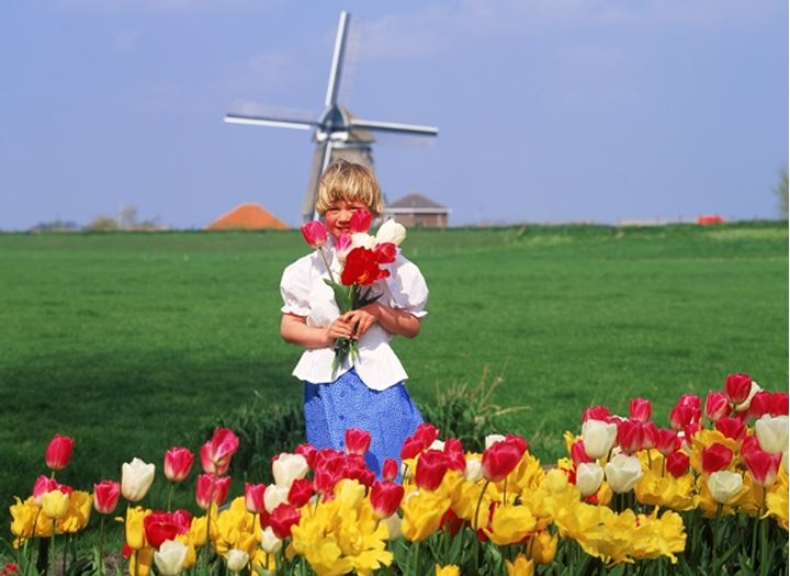 Dutch girl with tulips on farm in Holland with windmill