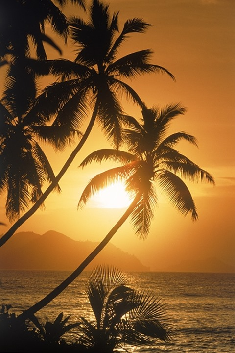 Palm trees silhouetted at sunset on La Digue Island in Seychelles