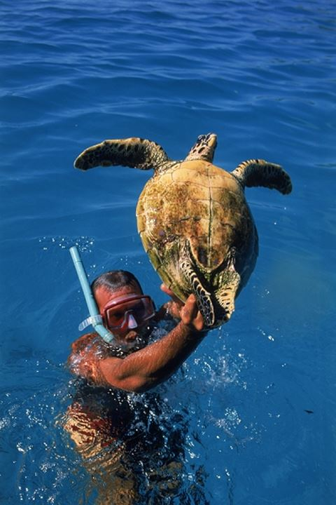 Male diver holding turtle above aqua waters in Malidive Islands