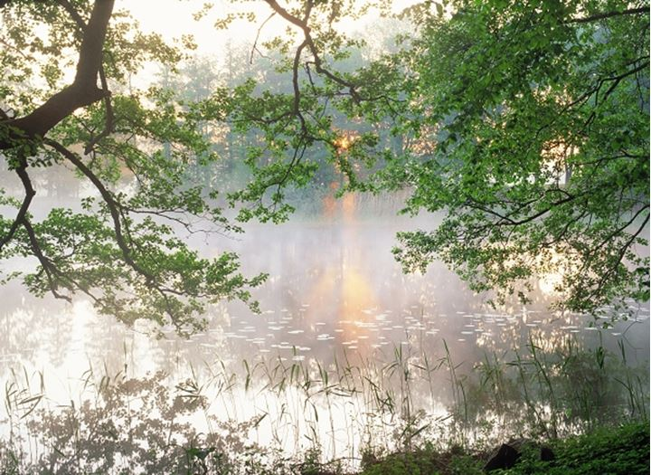Morning mist over tree lined lake in Sweden