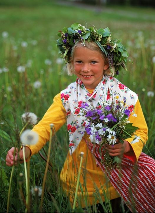 Girl in traditional Midsummer dress picking wild flowers for head crowns and Maypole in Sweden