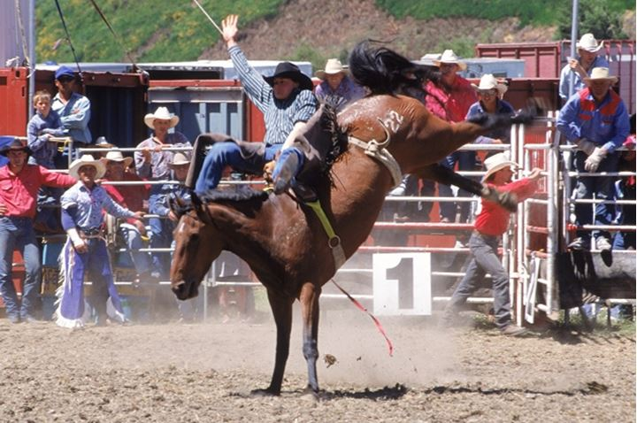Bronco riding in New Zealand rodeo