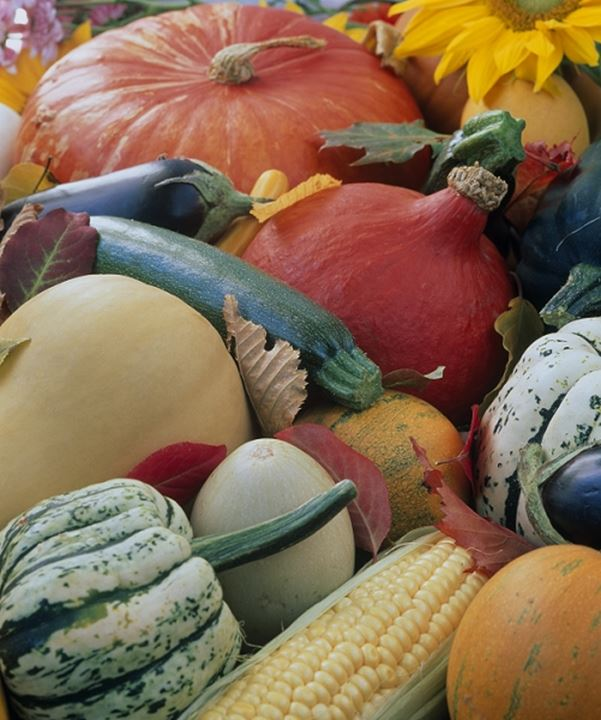 Close-up of pumpkins and vegetables