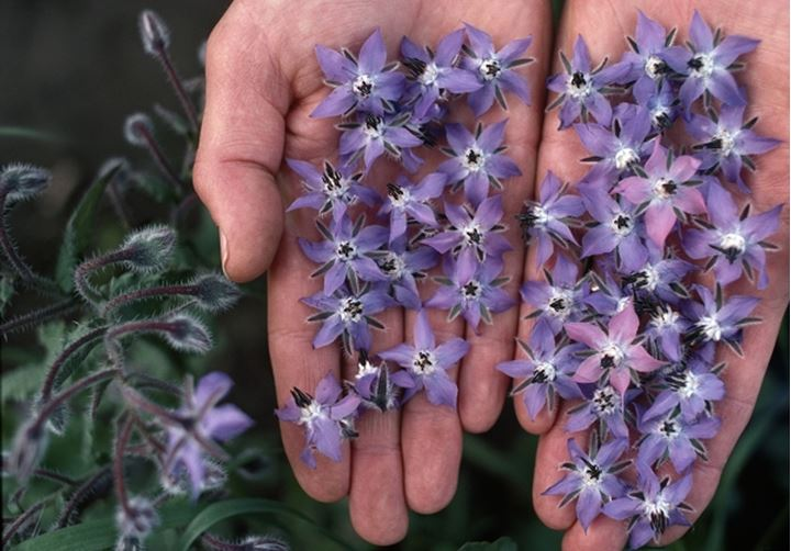 Close-up of a person's hands holding flowers