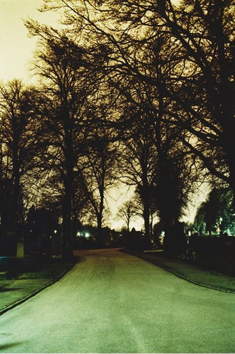 A road and bare trees