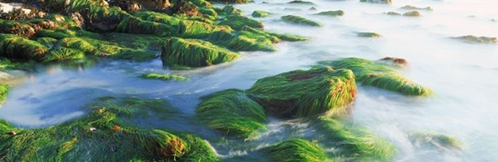 Waves washing over rocks and sea grass
