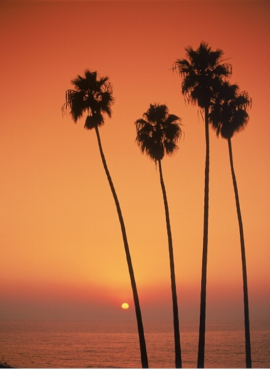 Four palm trees reaching into sunset skies