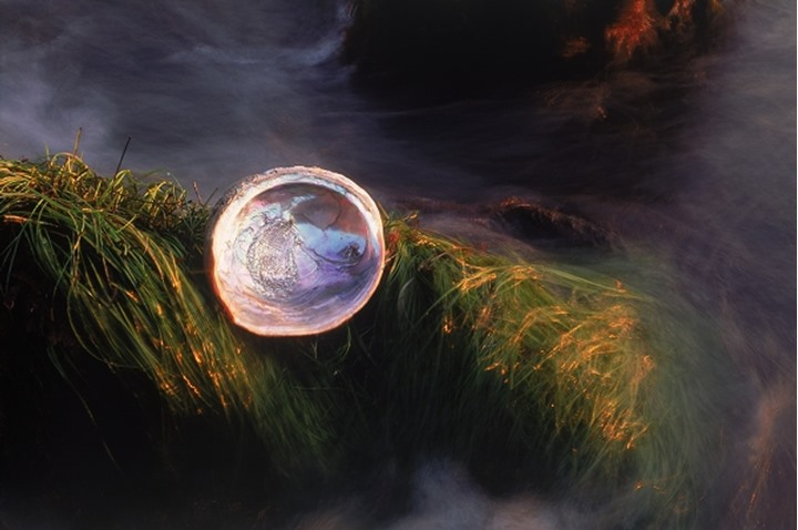 Abalone shell on grass covered rocky shore reflecting sunset light
