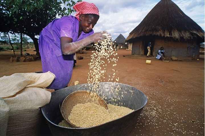 Woman cleaning or chaffing corn in Zimbabwe village