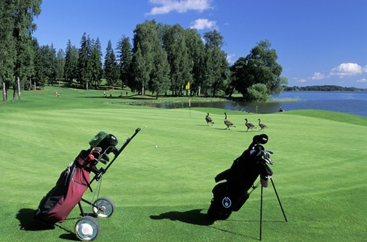 Score four Canadia geese birdies on Taby Golf Course green in Sweden