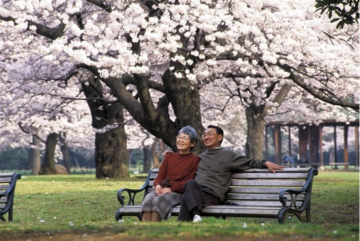 Couple surrounded by cherry blossoms in Tokyo park