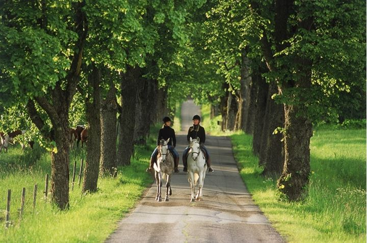 Two girls ridng horses on tree lined country lane in Sweden