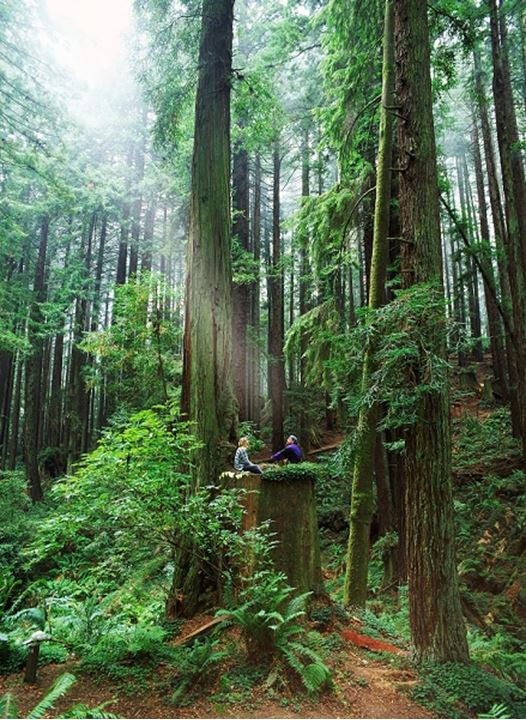 Couple in Redwoods on California Coast hit by suns ray