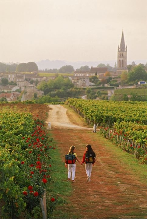Girls passing through St Emilion vineyards on way to school in France