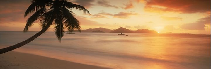 Palm tree silhouetted on La Digue with sun setting over Praslin Island