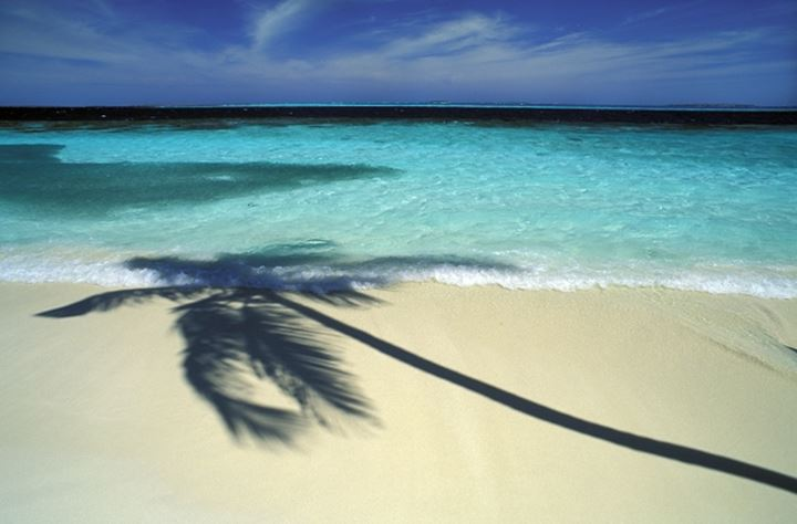 Palm tree casting shadow over sand and shore waves in Maldives