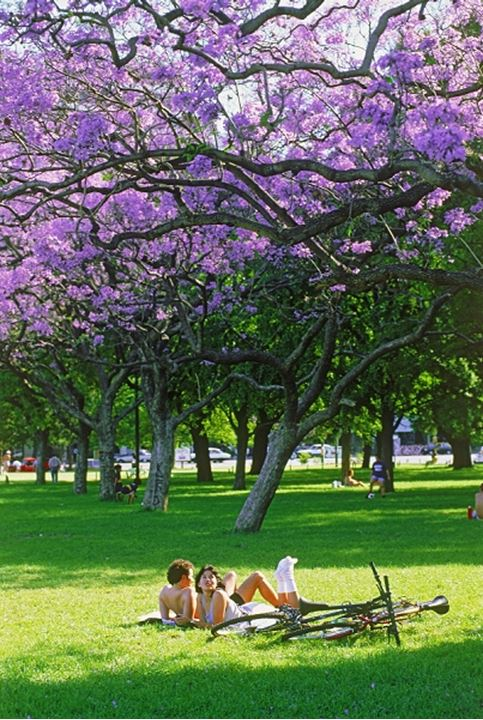 Couple in city park amid jacaranda trees in Buenos Aires