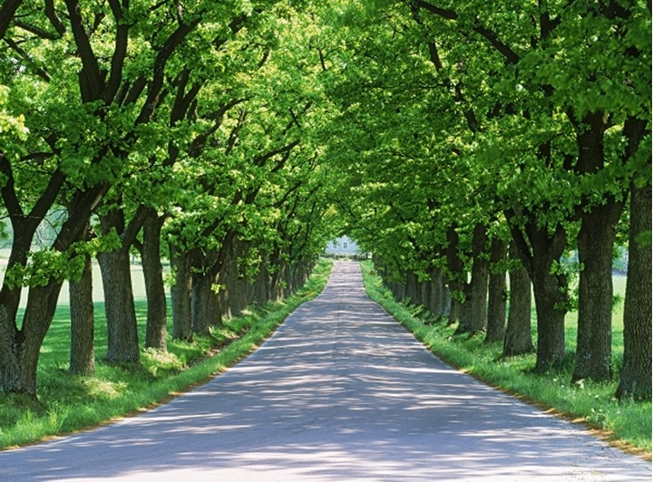 Tree lined country road in Sweden