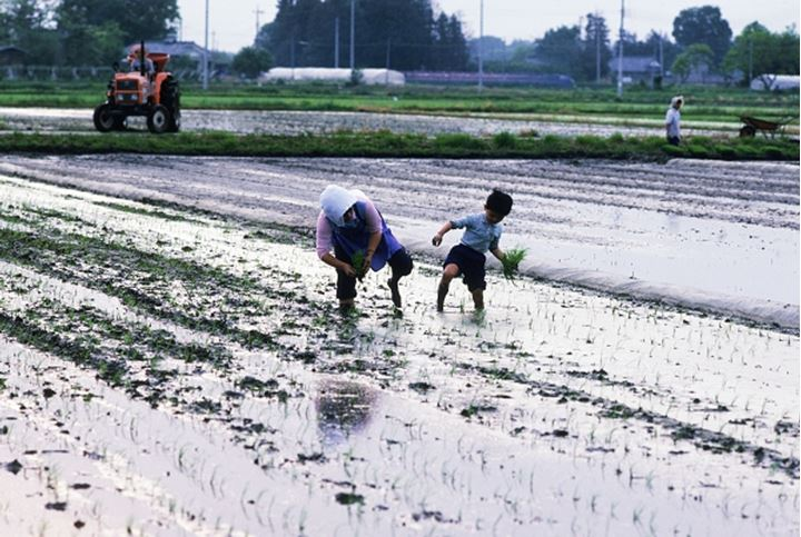 Mother and son working in family rice paddy