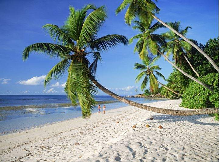 Palm trees over white sandy shores at Anse Severe on La Digue Island