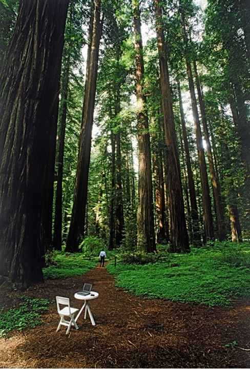 Businessman in Redwood National Park with laptop and cellphone on table