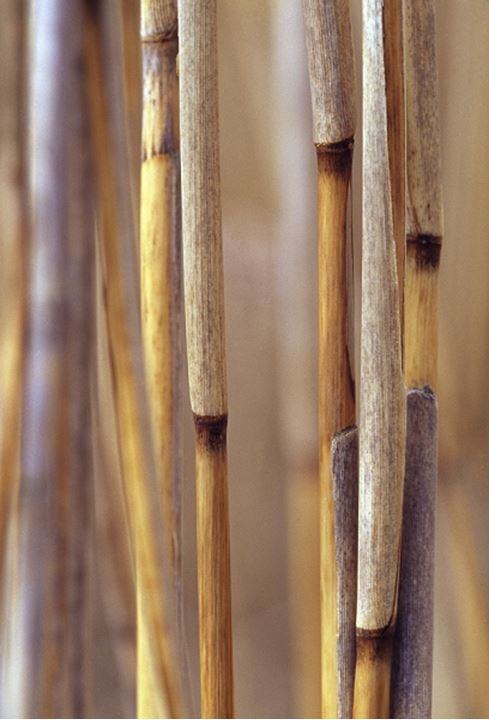 Close-up of twigs