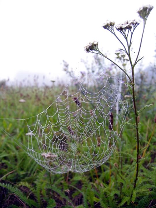 Spider's web on the grass