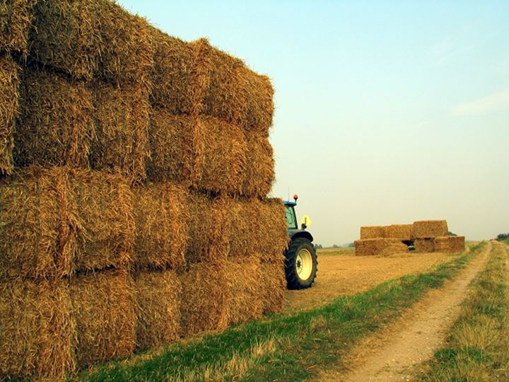Haystacks with a tractor in a field