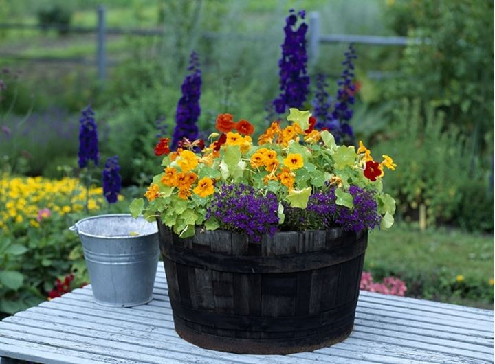 Close-up of a flower pot and a bucket on a table