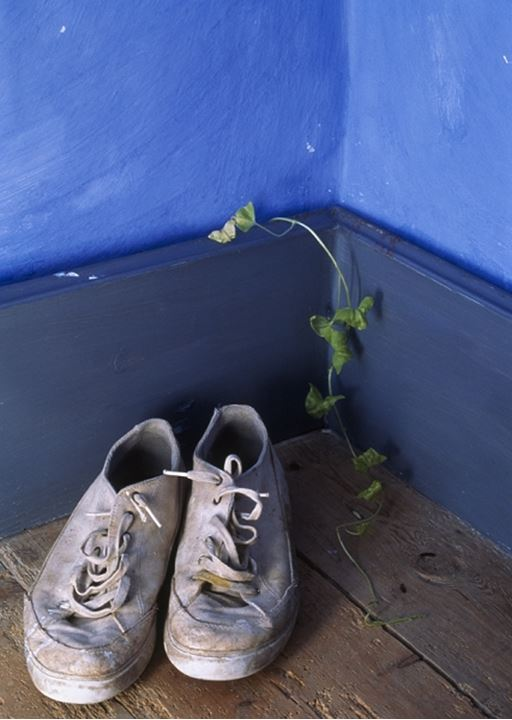 Sneakers and a flower in a corner