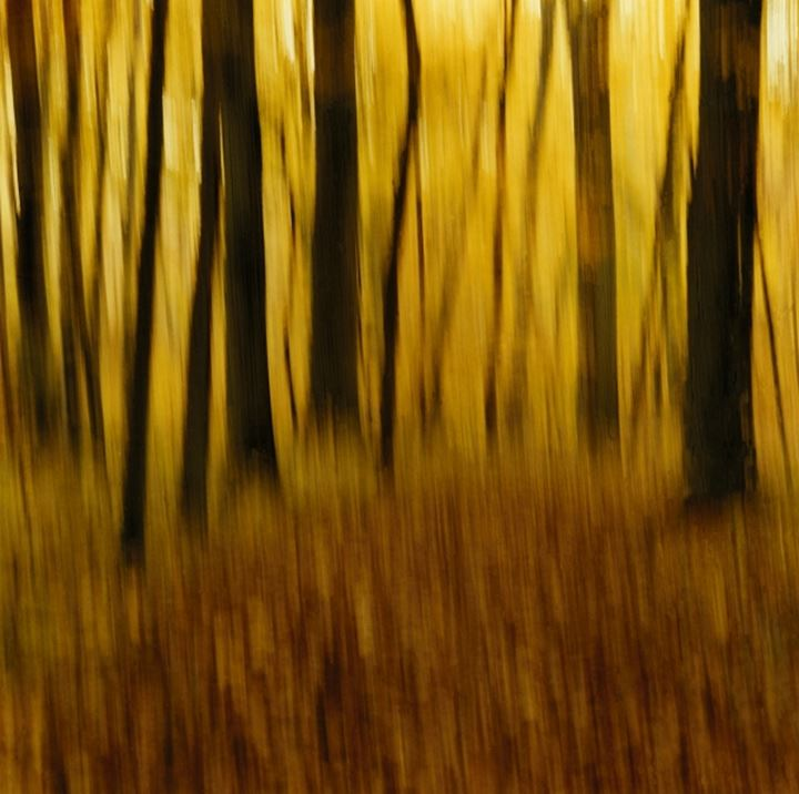 Blurry view of trees in a forest
