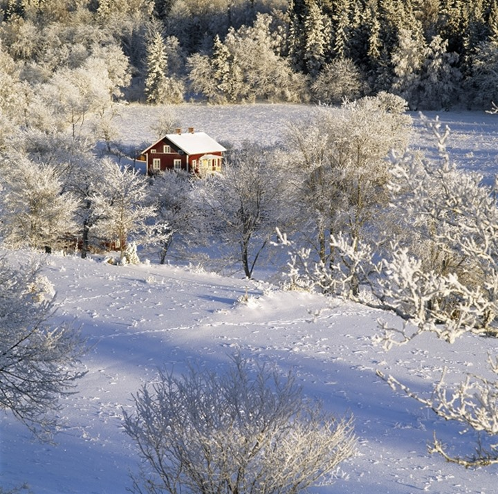 High angle view of trees on a snow covered landscape, Sweden