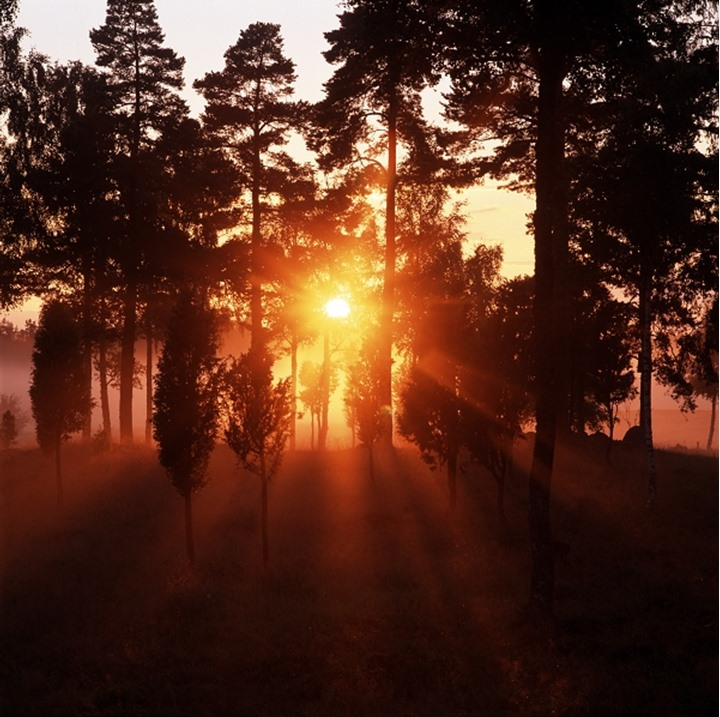 Sweden - Sunbeams radiating through trees in a forest