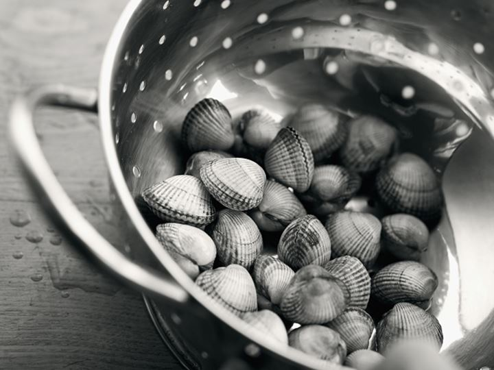 Scallop-shells in a sieve