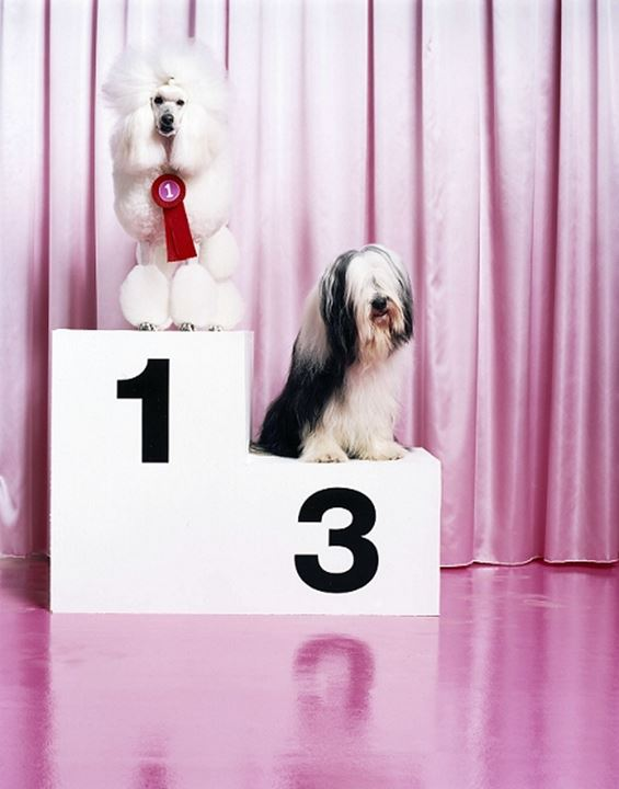 Dogs taking first and third places at a show