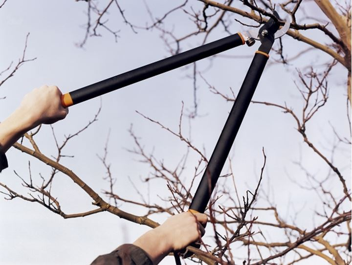 Hands holding shears and pruning branches