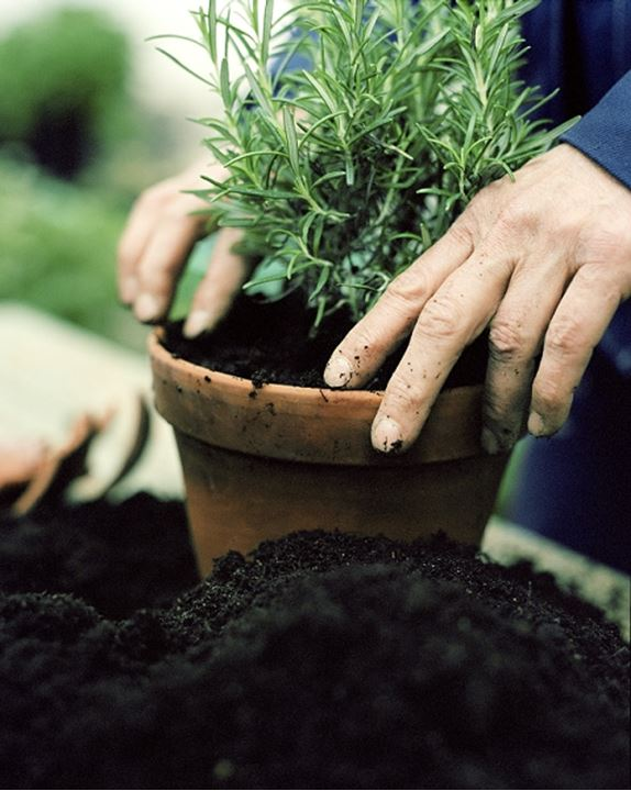 A person planting a plant in a flower pot