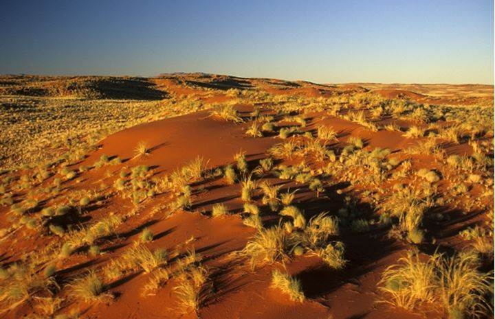 Aerial view. Showing structure of dunes. NamibRand Nature Reserve. Namibia