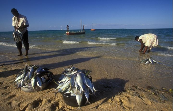 Fisherman cleaning fish. Mozambique