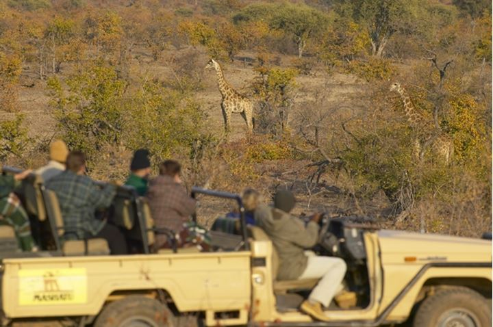 Guests on a Game Drive at Mashatu Game Reserve looking at Giraffe (Giraffa camelopardis). Northern Tuli Game Reserve. Botswana