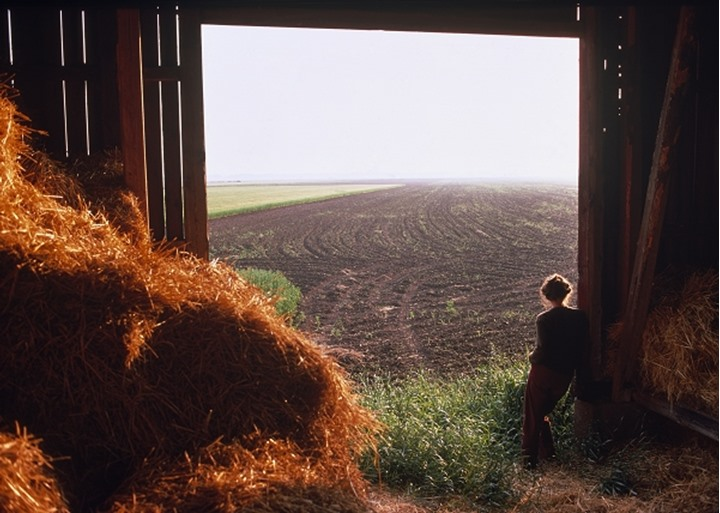 View from within a barn
