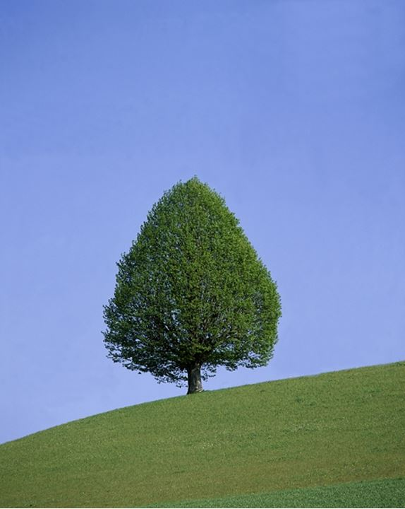 Tree on a grassy slope against blue sky