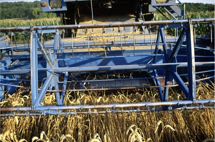 Combine harvester cutting wheat, France