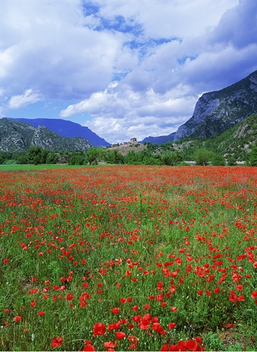 Spanish village of Coll de Nargo above field of red poppies in Catalonia in Pyrenees