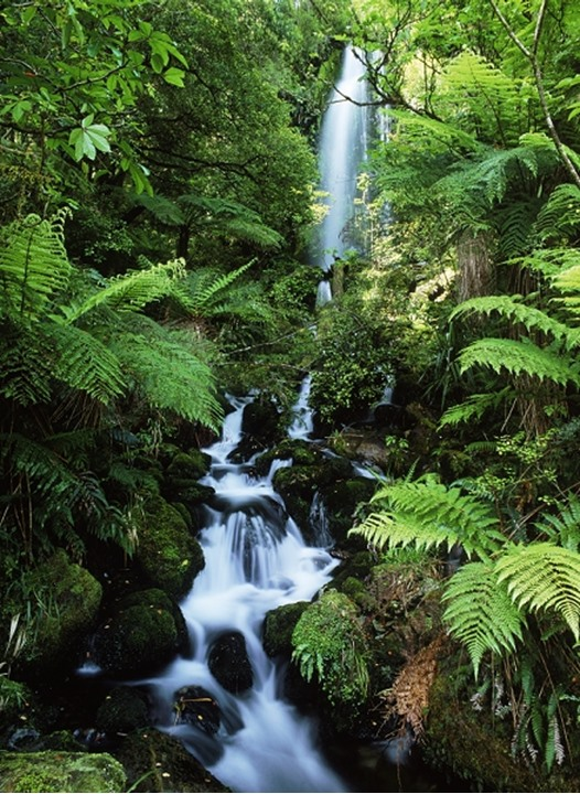 Stream in Hollyford Valley at Fjordland National Park on South Island New Zealand